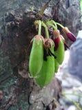 Τιμολόγηση των φρούτων στη Σρι Λάνκα στοκ εικόνες με δικαίωμα ελεύθερης χρήσης
