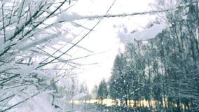 Τινάζοντας από το χιόνι από τους κλάδους στα όμορφα χιονώδεις δασικός έξοχος σε αργή κίνηση πυροβοληθε'ντα, κρύα χρώματα απόθεμα βίντεο