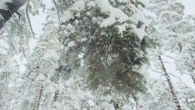 Τινάζοντας τους χιονώδεις κλάδους σε αργή κίνηση απόθεμα βίντεο