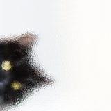 Τιτιβίζοντας γάτα Στοκ Φωτογραφία