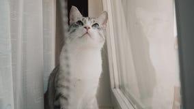 Τιτιβίσματα γατών στην πόρτα του δωματίου απόθεμα βίντεο
