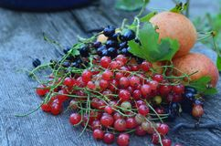 Τι θα μπορούσε να είναι καλύτερος από τα πρώτα juicy μούρα την άνοιξη; Στοκ Φωτογραφίες
