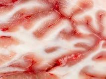 Τμήμα εγκεφάλου στοκ φωτογραφίες