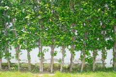 Τοίχος δέντρων Στοκ Φωτογραφίες