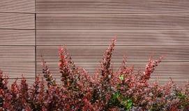 Τοίχος από τις επιτροπές με τον κόκκινο θάμνο στοκ εικόνες με δικαίωμα ελεύθερης χρήσης