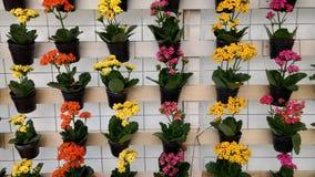Τοίχος βάζων λουλουδιών Στοκ φωτογραφία με δικαίωμα ελεύθερης χρήσης