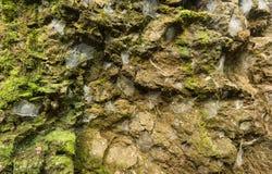 Τοίχος βράχου αραχνών Στοκ Φωτογραφίες