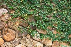τοίχος βράχου φυτών Στοκ φωτογραφία με δικαίωμα ελεύθερης χρήσης