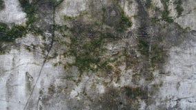 Τοίχος βρύου Στοκ Εικόνες