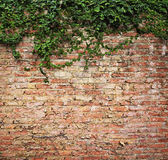 Τοίχος εγκαταστάσεων Στοκ Εικόνες
