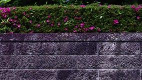Τοίχος κήπων πάρκων με τα λουλούδια και την πεταλούδα φιλμ μικρού μήκους
