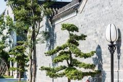τοίχος και streetlamp και πεύκο Στοκ Φωτογραφίες