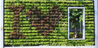 Τοίχος κηπουρικής Στοκ εικόνα με δικαίωμα ελεύθερης χρήσης