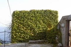 Τοίχος κισσών που καλύπτεται με τον κισσό Στοκ φωτογραφία με δικαίωμα ελεύθερης χρήσης