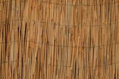Τοίχος κρεβατιών καλάμων Στοκ εικόνες με δικαίωμα ελεύθερης χρήσης