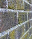 τοίχος λειχήνων Στοκ Φωτογραφίες