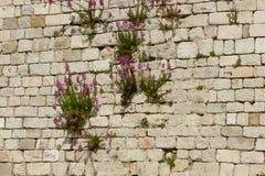 Τοίχος με τα λουλούδια Στοκ εικόνα με δικαίωμα ελεύθερης χρήσης