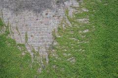 Τοίχος με τις εγκαταστάσεις Στοκ Εικόνες