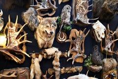 Τοίχος με το τρόπαιο κυνηγιού Στοκ Εικόνες