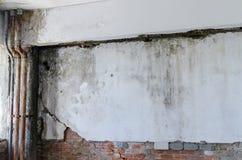 Τοίχος με το ωίδιο Στοκ φωτογραφία με δικαίωμα ελεύθερης χρήσης
