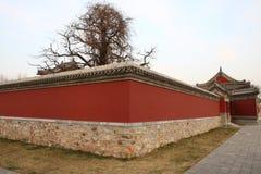 τοίχος ναών Στοκ Εικόνες