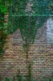 τοίχος πετρών πράσινων φυτών Στοκ εικόνα με δικαίωμα ελεύθερης χρήσης