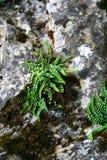 τοίχος πετρών φυτών Στοκ φωτογραφία με δικαίωμα ελεύθερης χρήσης
