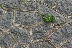 τοίχος πετρών φύλλων Στοκ εικόνα με δικαίωμα ελεύθερης χρήσης