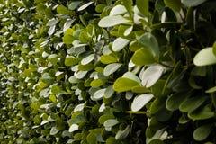 Τοίχος πράσινου Στοκ φωτογραφία με δικαίωμα ελεύθερης χρήσης