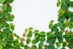 τοίχος πράσινων φυτών αναρρ Στοκ φωτογραφία με δικαίωμα ελεύθερης χρήσης