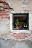 Τοίχος στη Βενετία Στοκ φωτογραφίες με δικαίωμα ελεύθερης χρήσης