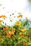 Τοίχος τέχνης λουλουδιών κόσμου Στοκ φωτογραφίες με δικαίωμα ελεύθερης χρήσης