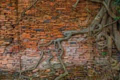 Τοίχος του παλαιού ναού Στοκ φωτογραφία με δικαίωμα ελεύθερης χρήσης