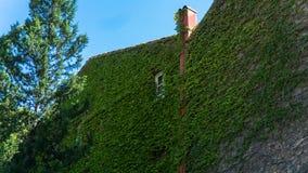 Τοίχος του σπιτιού, άγρια σταφύλια στην παλαιά πόλη Γεωργία Tbilisi Στοκ εικόνες με δικαίωμα ελεύθερης χρήσης