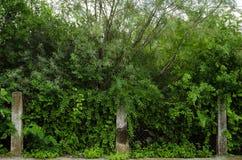 Τοίχος των πράσινων χορταριών με τρεις φραγμούς του σπασμένου τσιμέντου στοκ φωτογραφίες με δικαίωμα ελεύθερης χρήσης