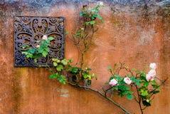 Τοίχος των τριαντάφυλλων στοκ φωτογραφία με δικαίωμα ελεύθερης χρήσης