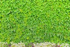 Τοίχος των φύλλων και ενός κρεβατιού λουλουδιών Στοκ φωτογραφία με δικαίωμα ελεύθερης χρήσης