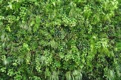 Τοίχος φυτού Στοκ Εικόνες