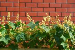 τοίχος φυτών τούβλου στοκ εικόνα
