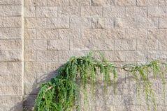 τοίχος φυτών Στοκ Εικόνες