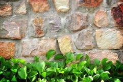 τοίχος φυτών Στοκ εικόνες με δικαίωμα ελεύθερης χρήσης