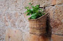 τοίχος φυτών Στοκ φωτογραφία με δικαίωμα ελεύθερης χρήσης