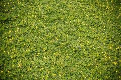 Τοίχος φυτών Στοκ εικόνα με δικαίωμα ελεύθερης χρήσης