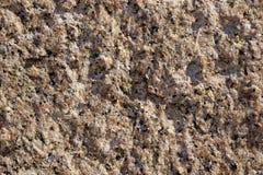 Τοίχος ψαμμίτη Στοκ Εικόνα