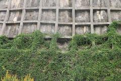 Τοίχος Στοκ φωτογραφίες με δικαίωμα ελεύθερης χρήσης