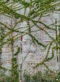 Τοίχος Unginished στοκ φωτογραφίες με δικαίωμα ελεύθερης χρήσης