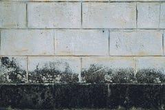 Τοίχων άσπρος λεκές λειχήνων τούβλου βρώμικος Στοκ Φωτογραφίες