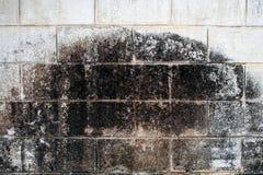 Τοίχων άσπρος λεκές λειχήνων τούβλου βρώμικος Στοκ Εικόνα