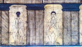 Τοιχογραφία απεικόνισης ιατρικής σε Wat Po, Μπανγκόκ Στοκ Εικόνα
