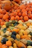 Τολμηρή και ζωηρόχρωμη εικόνα υποβάθρου των φωτεινών πορτοκαλιών, πράσινων και άσπρων κολοκυθών και της κολοκύνθης για την πώληση στοκ φωτογραφία